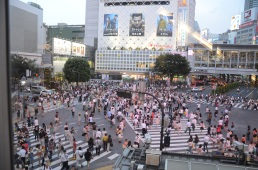 Shibuya crossing - incredible!